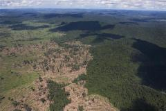 Defrisarile- jungla Amazoniana